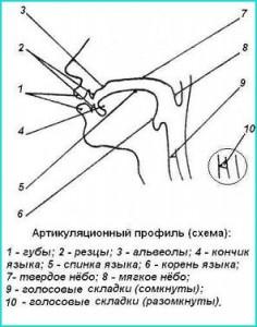 Анатомо-физиологические основы речи. Анализатор звуков.